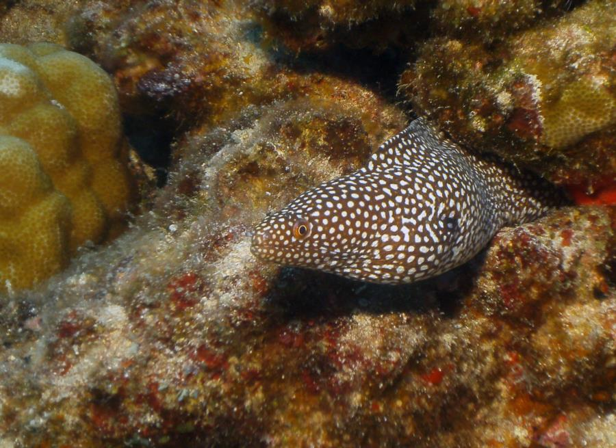Alua Beach - Eels a Plenty