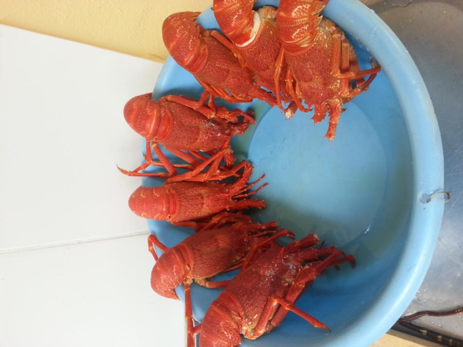 West Coast Rock lobster