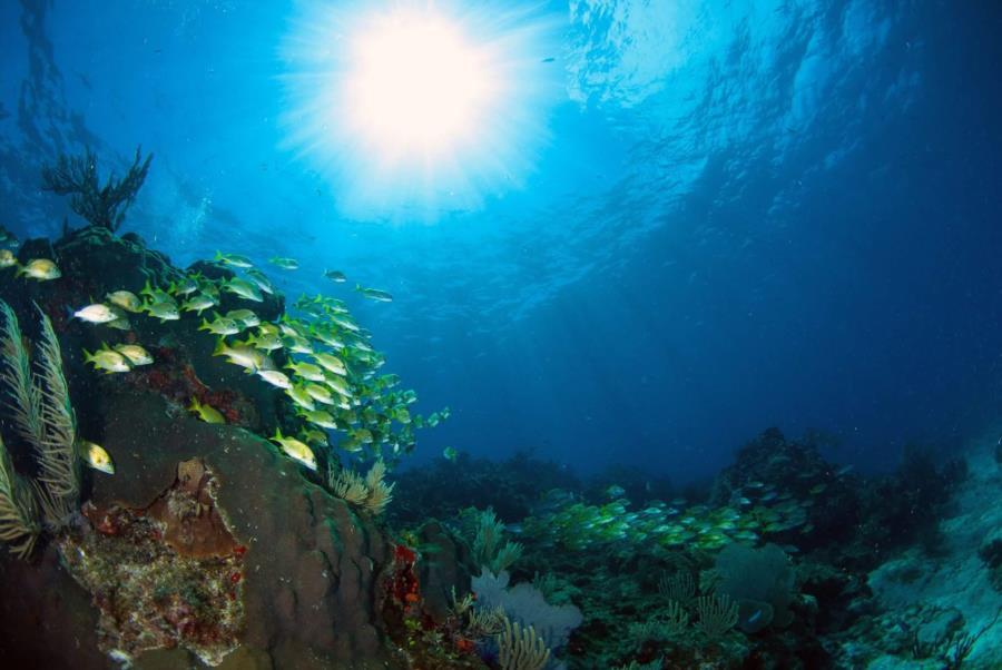Las Banderas Reef