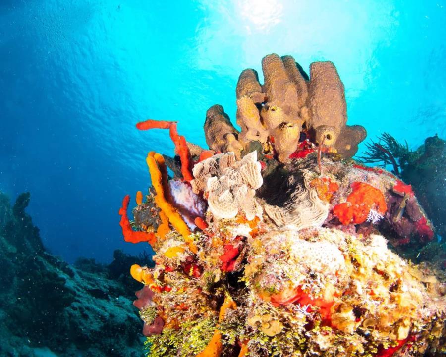 Cozumel Reefscape