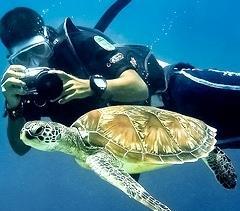 Ultra Dive turtle