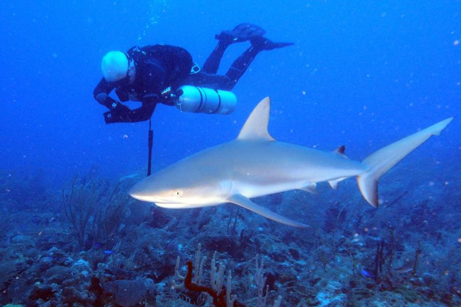Diving in Sidemount
