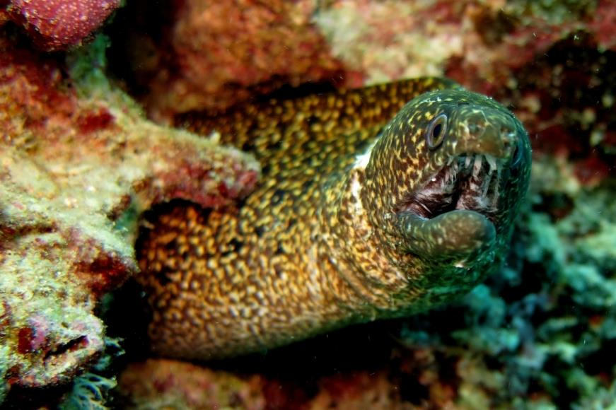 another eel