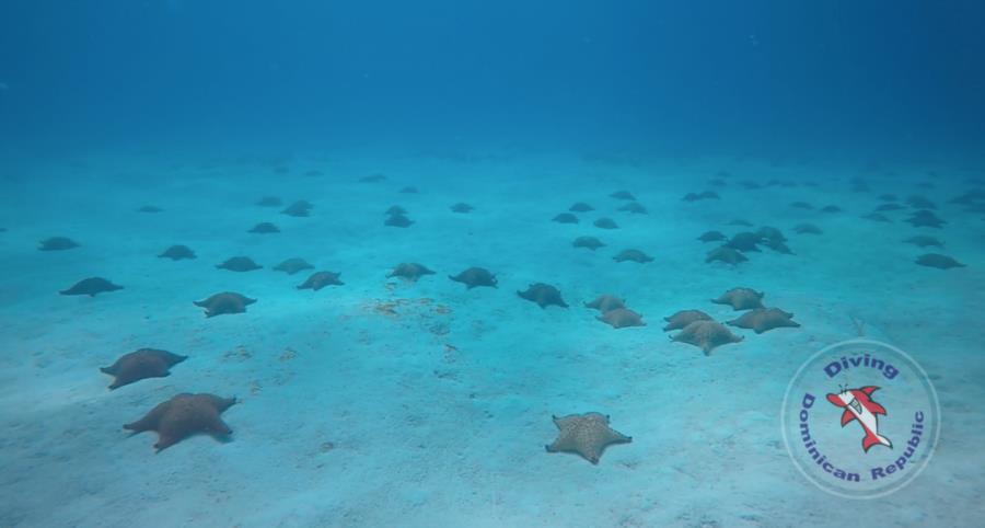 Starfish Garden Bayahibe