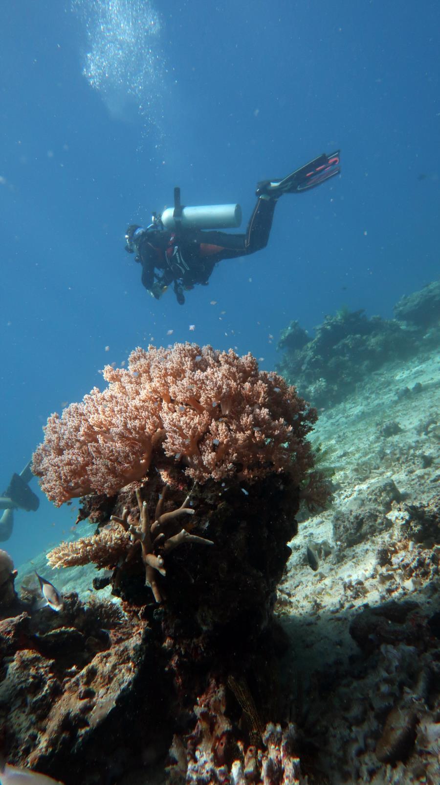 Diving in El Nido