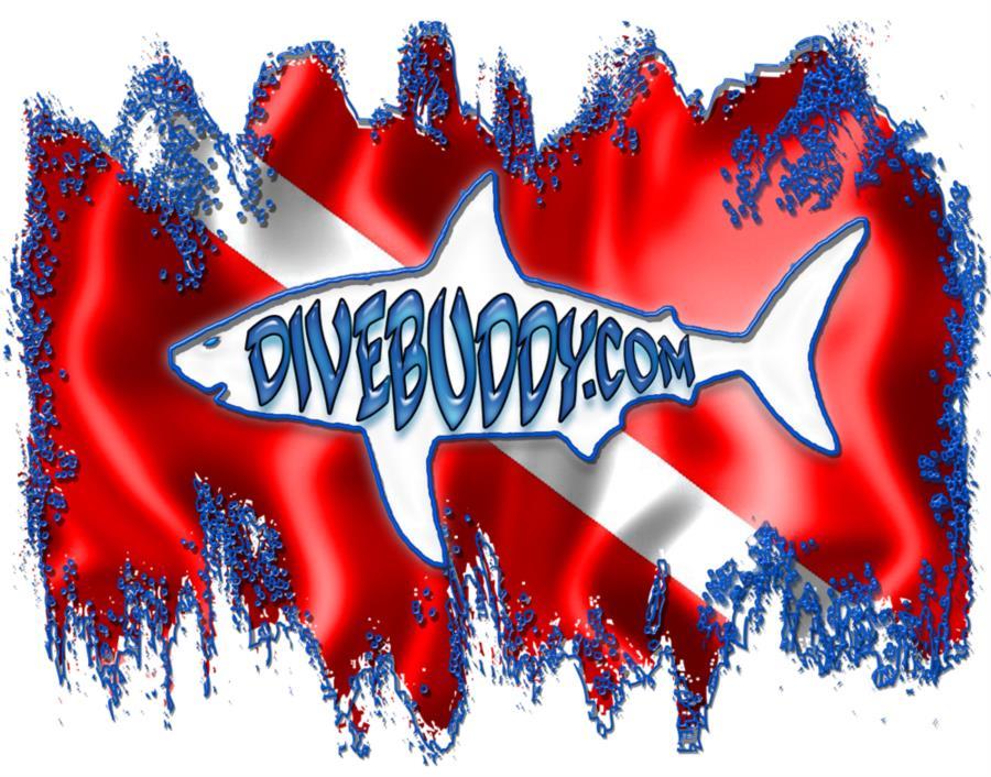 White-Shark-Splash-divebuddy.com