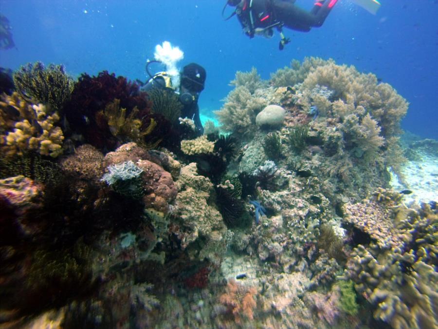 Diver at Balicasag