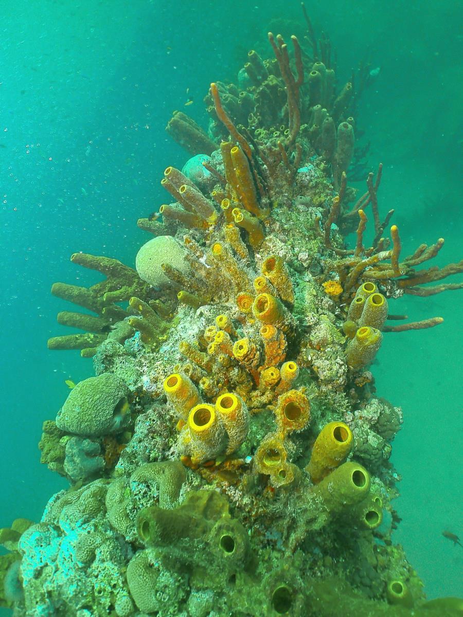 Aruba / Antilla