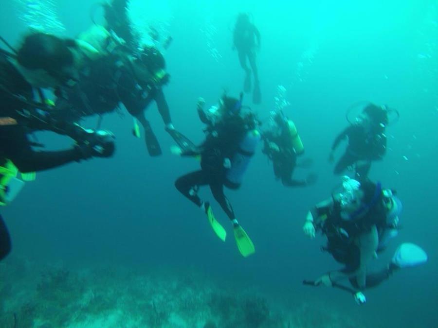 IDC Recreational Dive, Utila, Honduras