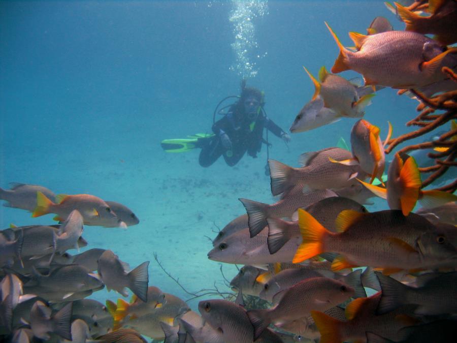 First Dive Trip: Belize