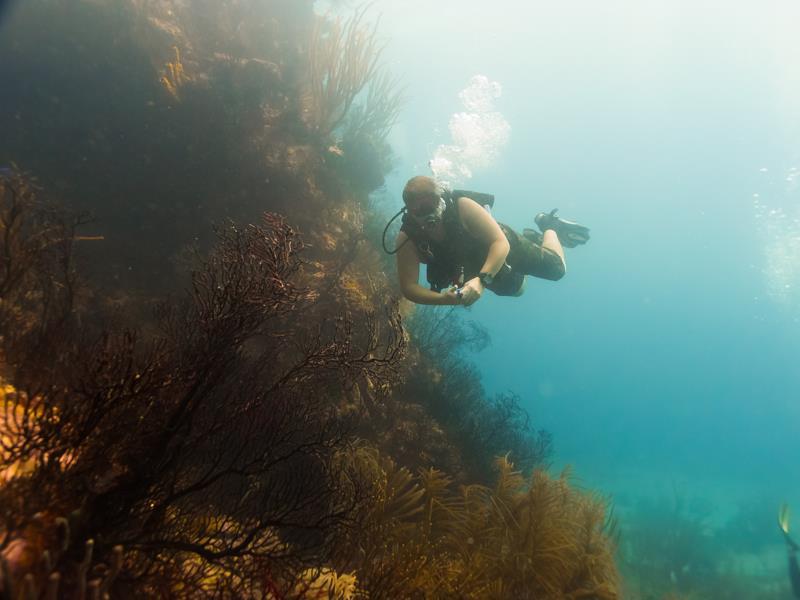 Diving at Sisters Rocks