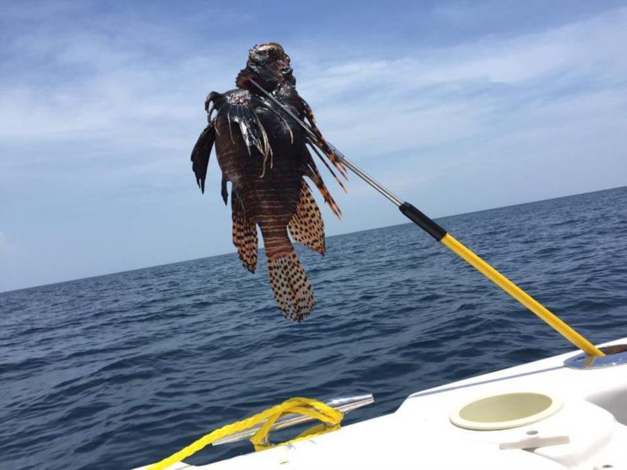 Lionfish Chevron Rig