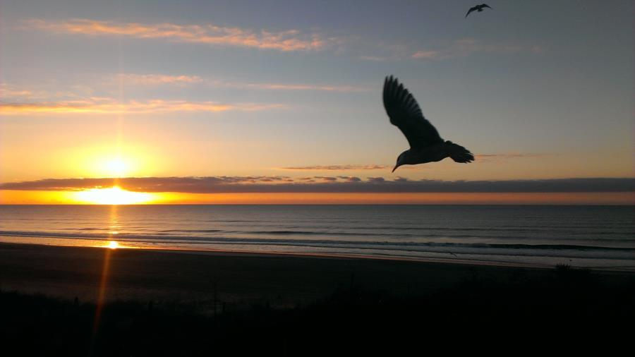 Sunrise and Seagulls in Emerald Isle, NC