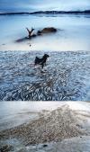 Moose and Fish Frozen in Norwegian bay