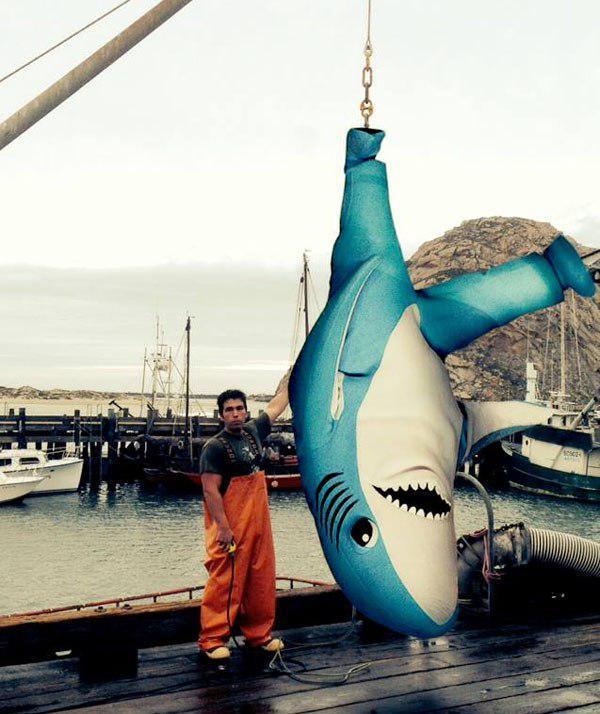 Left Shark Caught