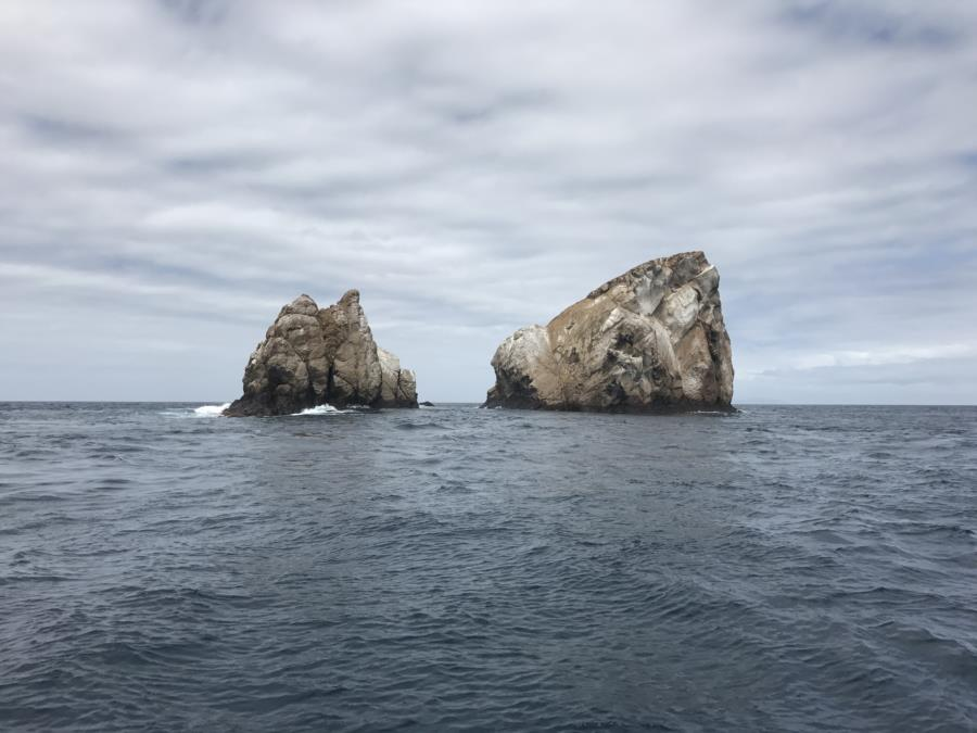 Rocas gordon, Galapago