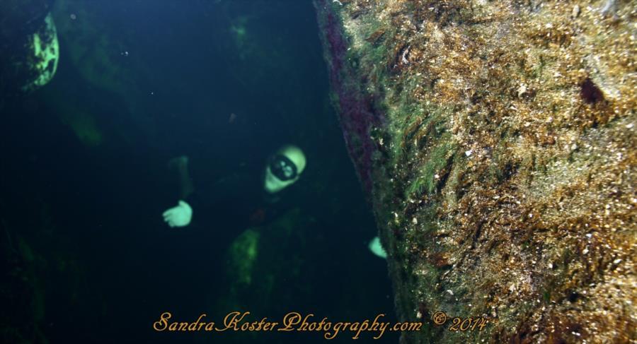 Freediver David Head at Blue Spring State Park 1