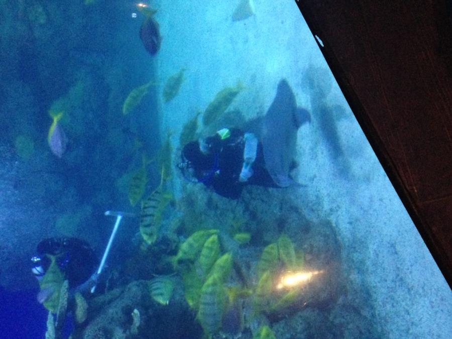 Feeding in the Shark Tank