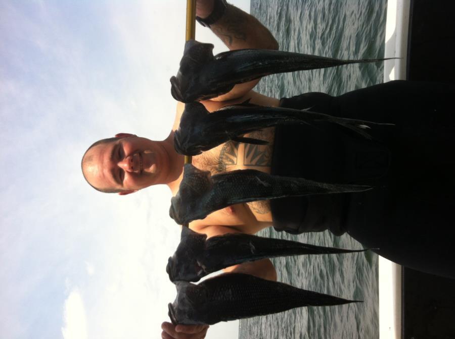 Black Sea bass. Ferry boat wreck off belmar nj