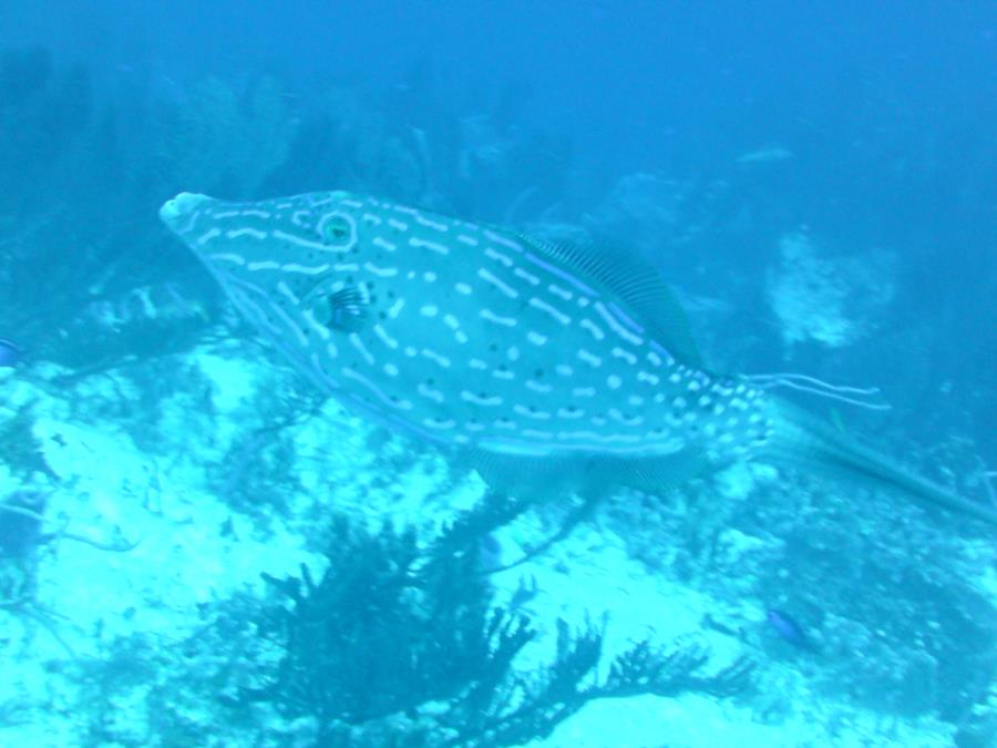 another fishy in Cozumel