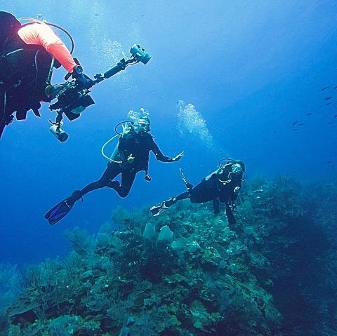 Wall Dive-Rincon
