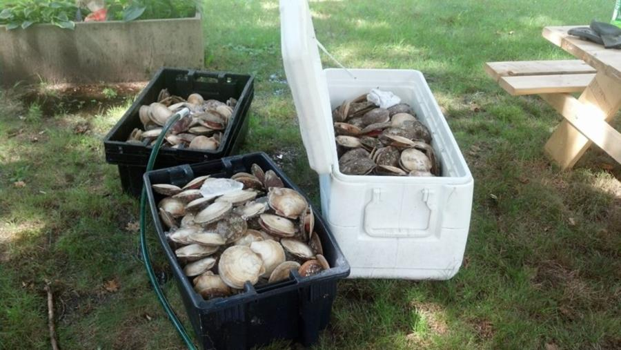 Good day of scalloping