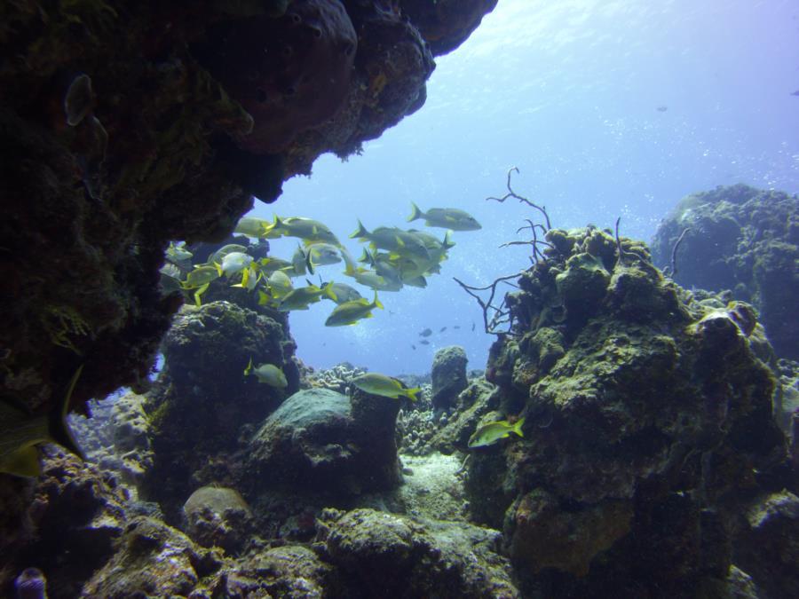 Fish under ledge