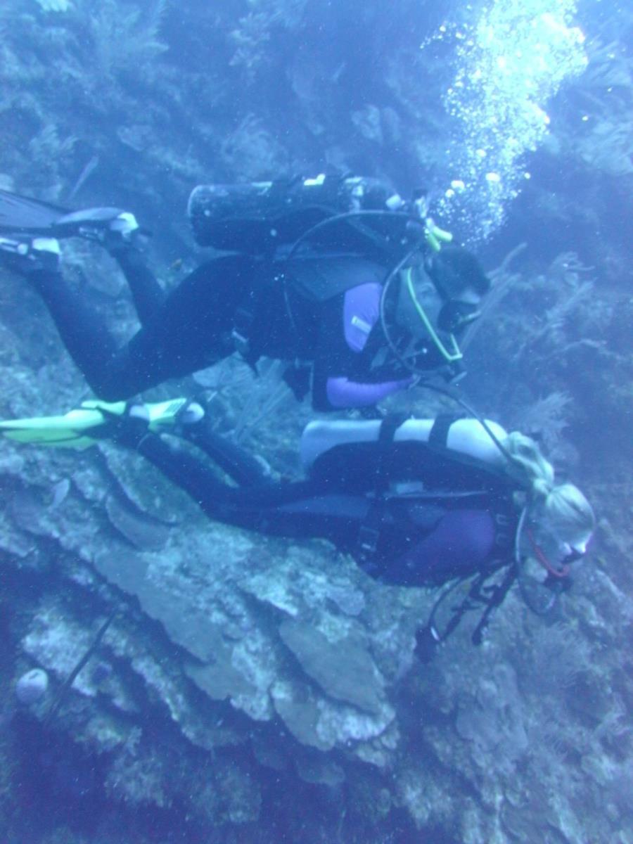 Diving Ron's Playground at Camp bay beach dive & adventure resort -Roatan Honduras