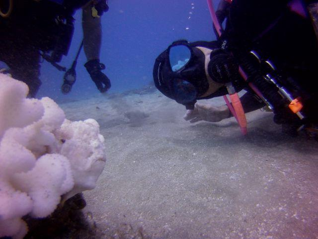 white frogfish