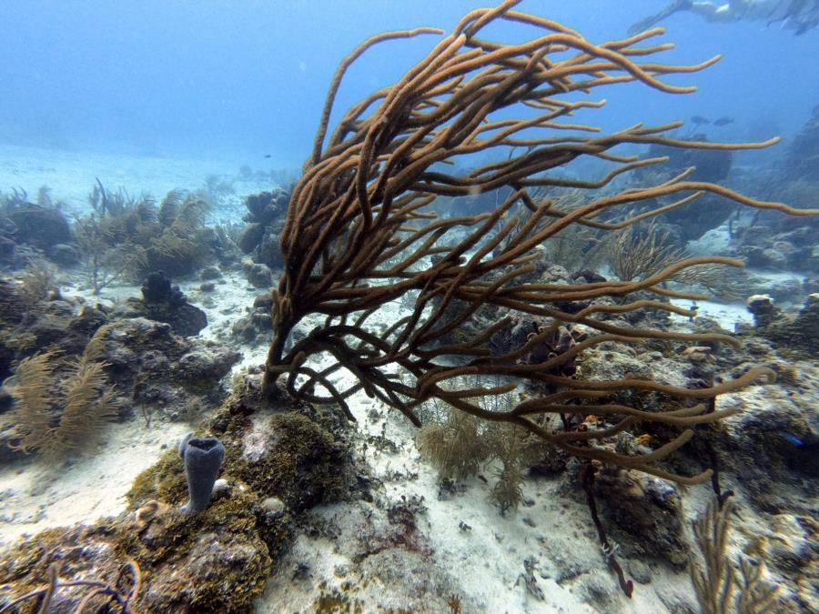 Underwater breeze