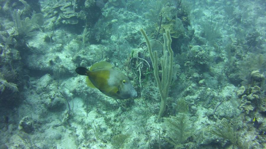 Nassau reef with fish