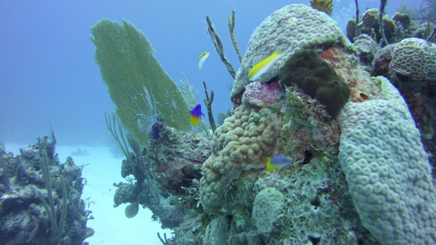 Nassau reef with fish