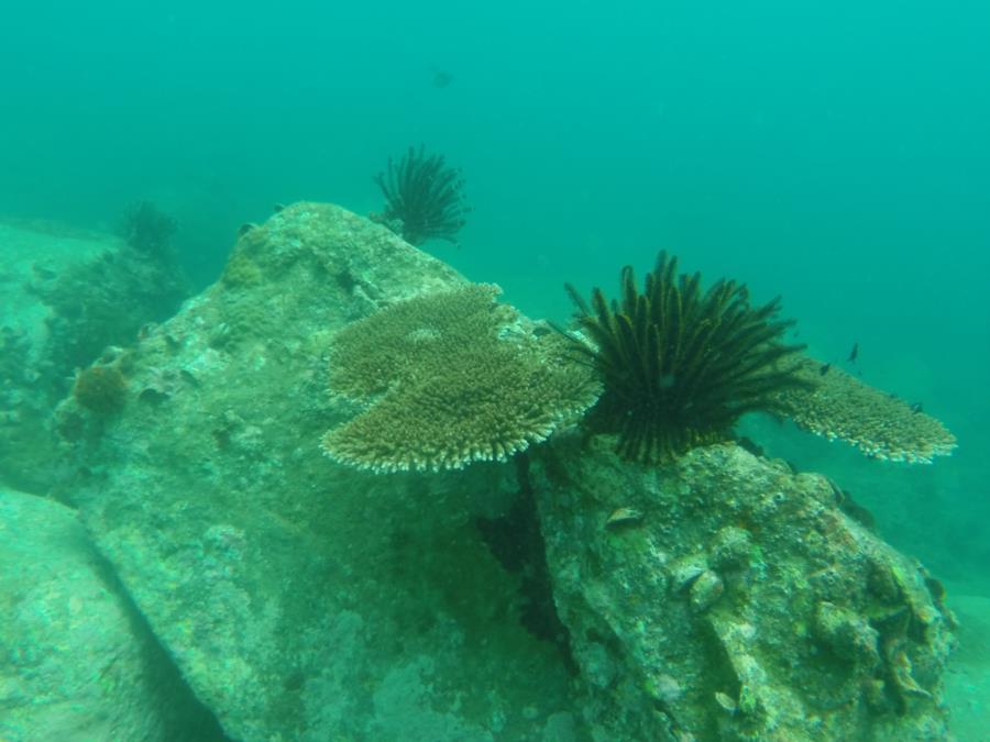 Dive Hainan, China