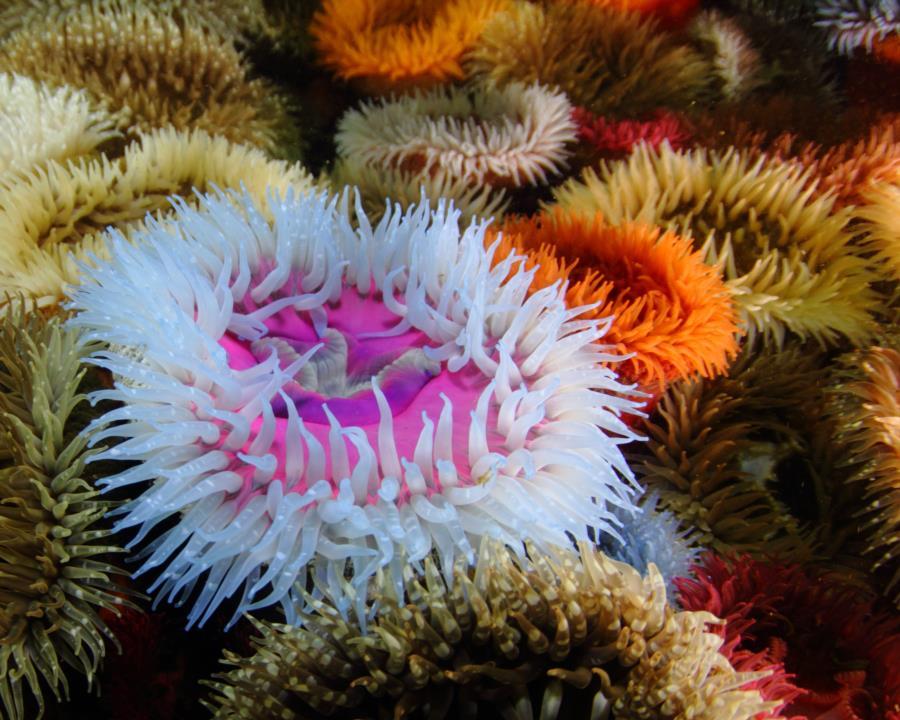 Britannia reef