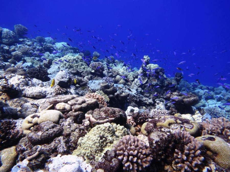 Wake Island seascape