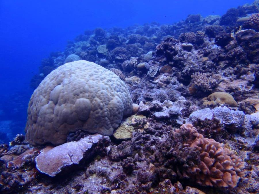 South Reef Wake Atoll