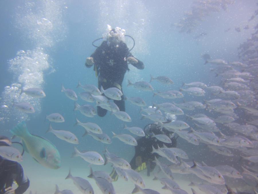 Galapagos 2012