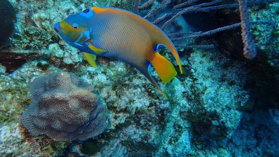 Diving Caribbean