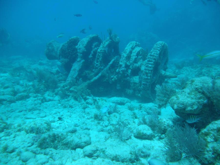 Molasses Reef, Key Largo