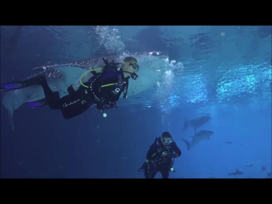Georgia Aquarium - Me and a Whale Shark