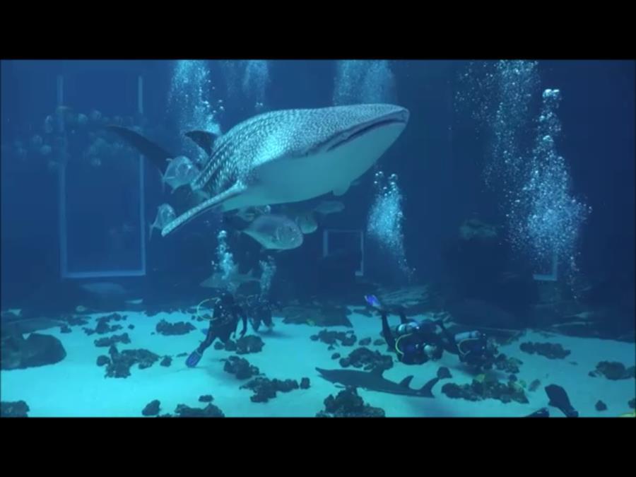 Georgia Aquarium - Whale Shark
