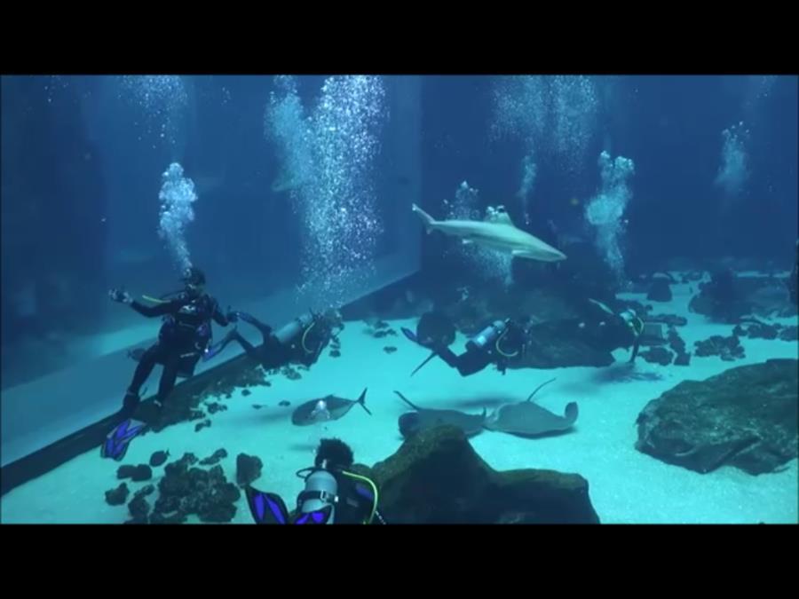Georgia Aquarium - Main Exhibit Area