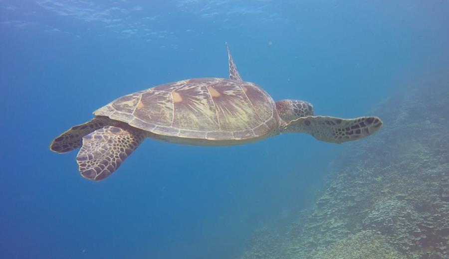 Turtle Gab Gab Beach Guam