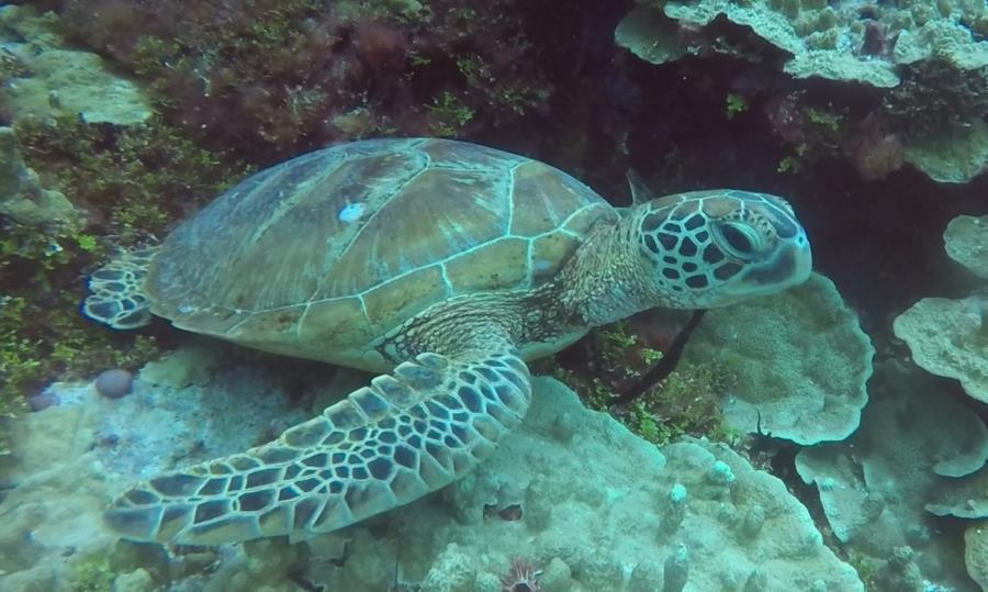 Turtle Gab Gab Beach, Guam