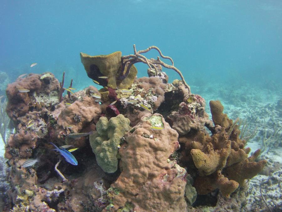 Nice Shallow Reef