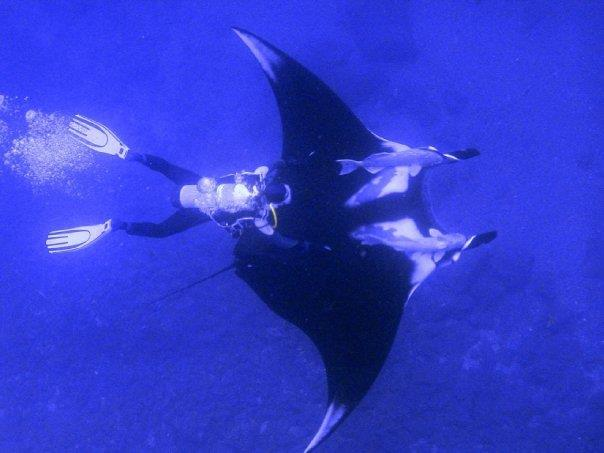 This idiot was holding on to the Remoras that were attached to the Manta