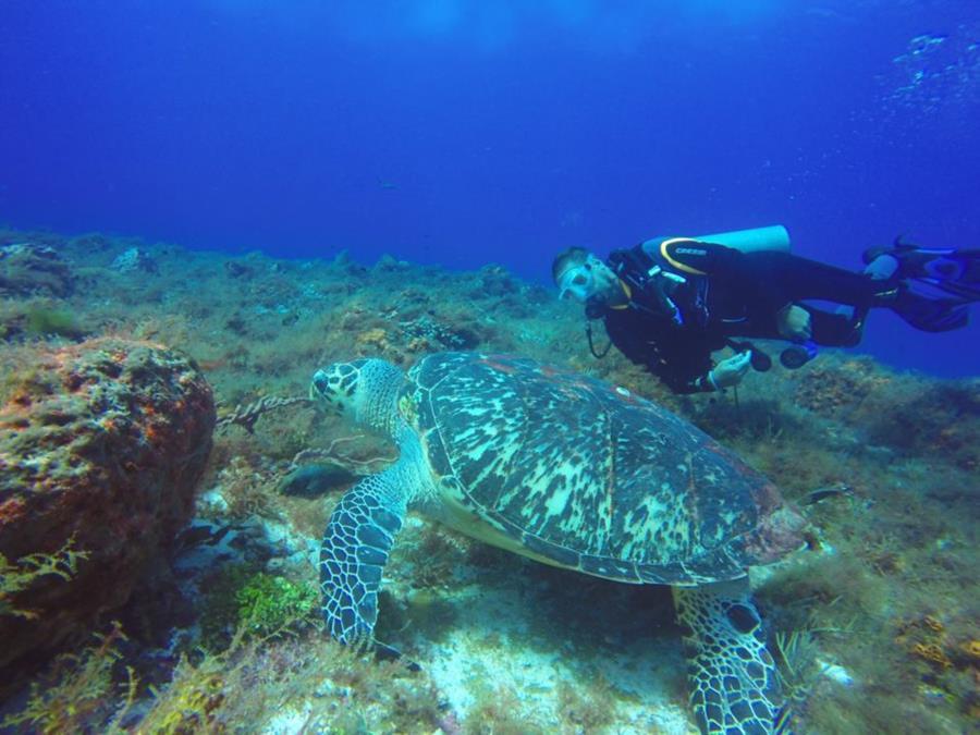 Hawksbill sea turtle Cozumel