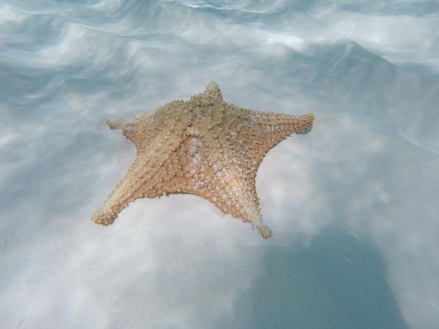 starfish@elcielo