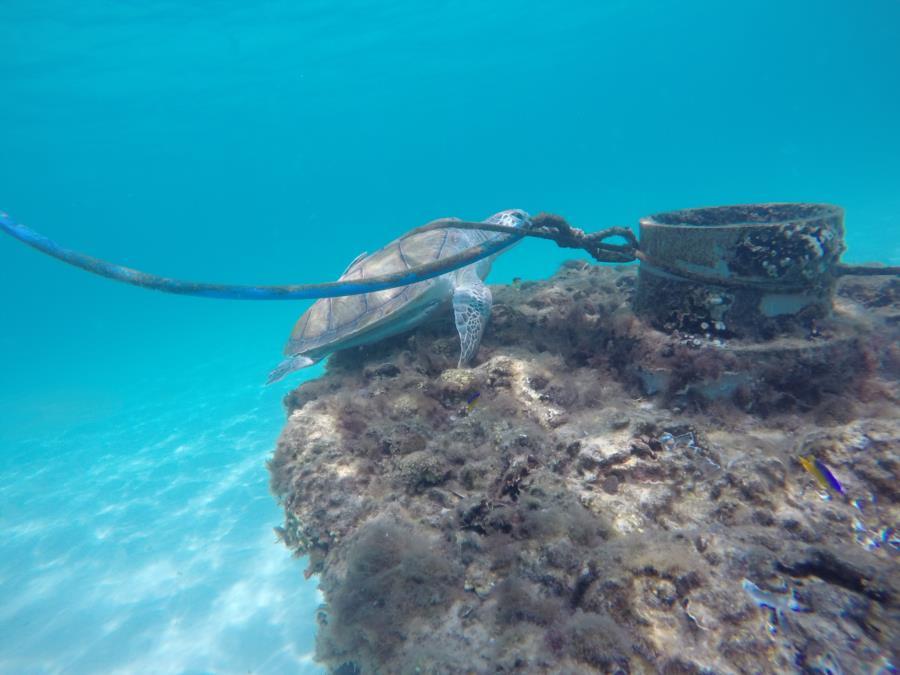Turtle in Navarre 1