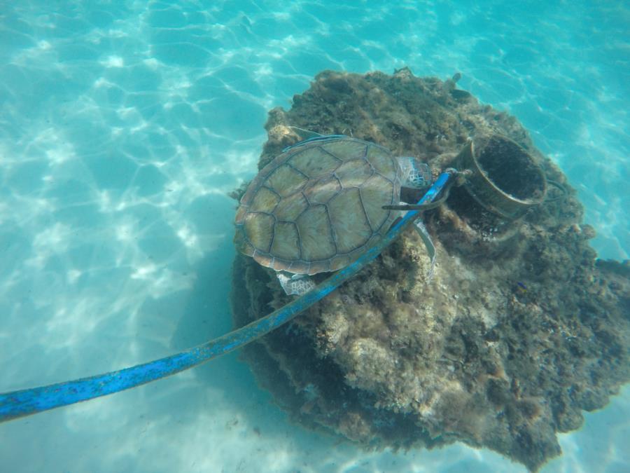 Turtle in Navarre 2